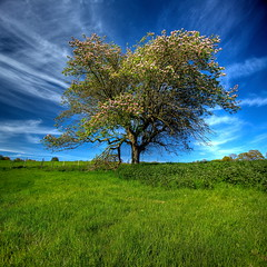 Apple tree (Wilfried.B) Tags: england tree nature landscape kent spring filter polarizer 1022mm hdr appletree photomatix hawkhurst malusdomestica canon40d vertorama wilfriedb