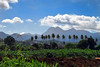 My island... mwen malad aw ! (jendayee) Tags: blue trees sky mountains grass clouds coconut martinique sightseeing land