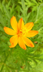 Flor de Jardim (Anselmo Garrido) Tags: macro closeup flor stock jardim omnia flickrstock omnia2