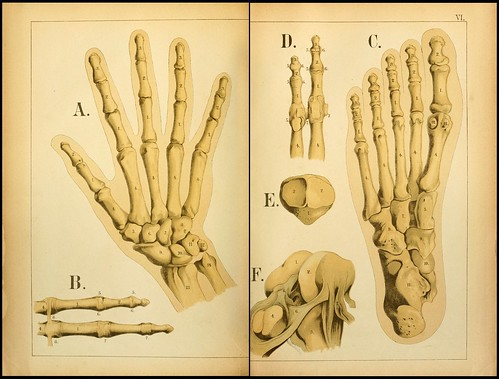 An atlas of Anatomy (FF Miller, 1879) d