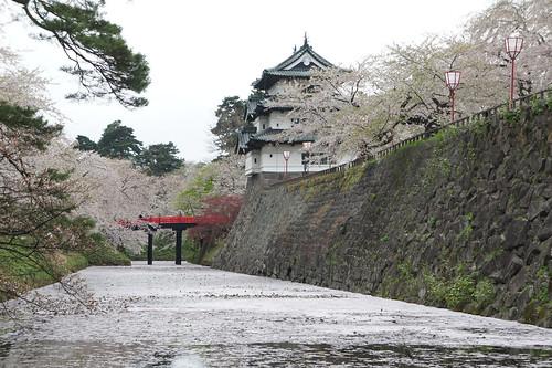 Hirosaki castle in cherry blossom festival season