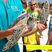 Sea Turtles Released Amelia Island, Florida