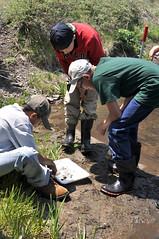 Aquatic Ecology II (New Mexico Forestry Camp) Tags: people water ecology insects