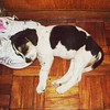 sleeping on mommy's shoes... (angeltamor) Tags: dogs popo