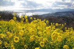 二宮・吾妻山公園より、国府津・真鶴方面を見る