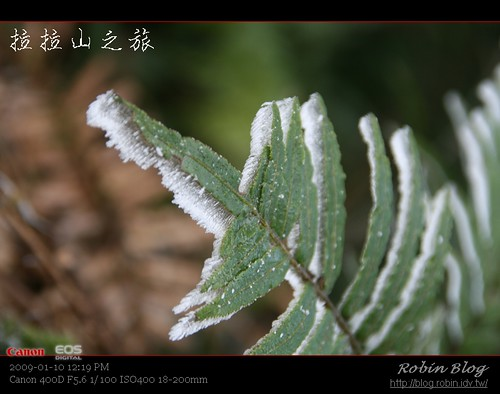 你拍攝的 20090110數位攝影_拉拉山外拍315.jpg。