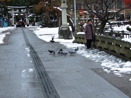 上杉神社~鳩