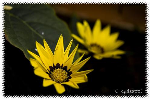 Flor e Luz