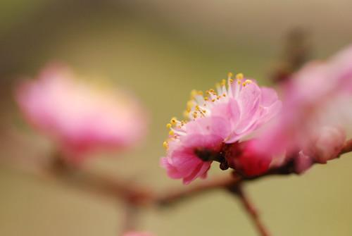 大阪城の梅苑