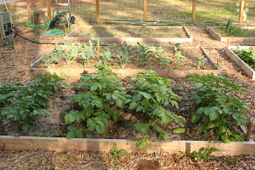 Garden 036