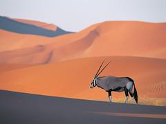 large antelope (diseny_lee) Tags:
