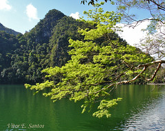 Lake of the Pregnant Maiden (Vitor Estrela Santos) Tags: lake verde green landscape lago lagoon vert malaysia lagoa 1001nights legend lenda beautifulworld vitormes