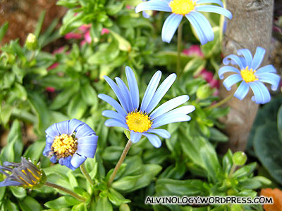 Blue flowers with long petals