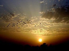 Falak ((s@jj@d)~`~DiL~AwAiZ~`~ Back) Tags: blue pakistan sunset sky sun white black colour bird love nature beautiful beauty birds yellow portraits pakistani rays sunrays syed pabbi shah landscap landscaps dil aisa sajjad pprtrait peshawer nowshera chirat vosplusbellesphotos awaiz dilawaiz