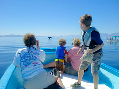Blue Whale - Isla Coronados, Sea of Cortez, Loreto, Mexico (ex_magician) Tags: pictures mexico photo bury al interesting russell image photos picture lynn adobe whale baja douglas leigh loreto jol whalewatching seaofcortez lightroom moik whaletail bluewhale glidden adobelightroom innatloretobay hilsinger islacorodados alglidden