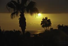 tenerife sunset-1 (mavur) Tags: sjór sjr sólsetur pálmatré kanarí2007 granhotelbahiadelduque slsetur kanar2007 plmatr