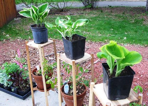 plants_from_grandma3