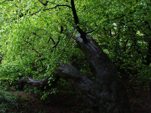 Dalkey Hill Rainy 045