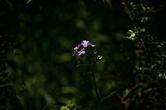 Alone in the Woods (viking_79) Tags: flowers sunlight macro outside path trails naturallight trail canon5d partlycloudy sacandfox sigma100300f4 ex100300f4