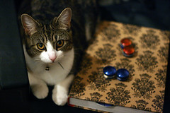 Lily loves shiny things (Lucie-Jane) Tags: cute cat jewelry jewellery ear stretching plugs ef50mmf18 earstretching catmustgetinonthepicture