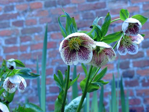 Dappled Blooms