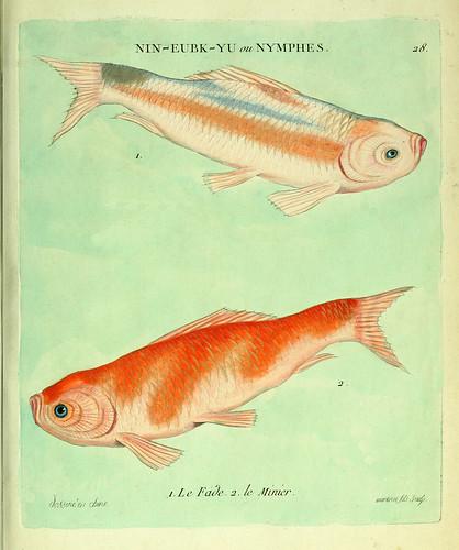 013- El aburrido y el minero-Histoire naturelle des dorades de la Chine-Martinet 1780
