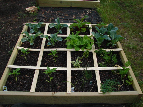Square Foot Garden #2
