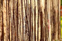 Innereien der Mauer (Tropical Diaspora) Tags: berlin tropical sauber berlim diaspora mauer berlinermauer denkmal bernauerstr djgarrincha tropicaldiaspora