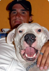 Leandro e Indgena (amigos inseparables) (Aprehendiz-Ana La) Tags: naturaleza amigos luz argentina nikon perros mascotas mardelplata hijo dogo dogoargentino perrosblancos aprehendiz