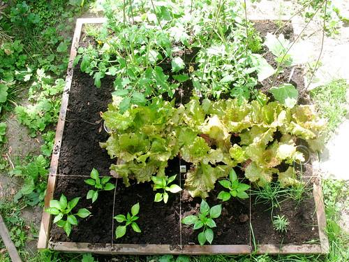 garden plot 1 week 5