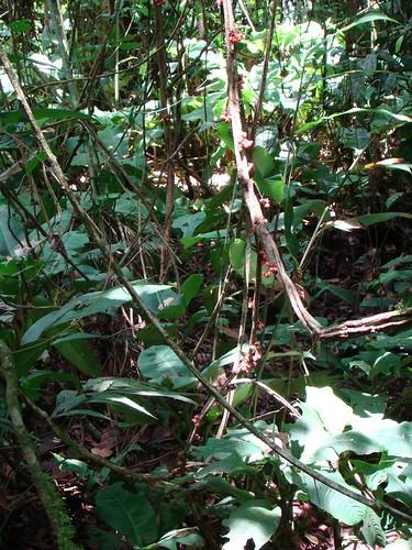 Veragua Rainforest, 7 Festival de Matemática