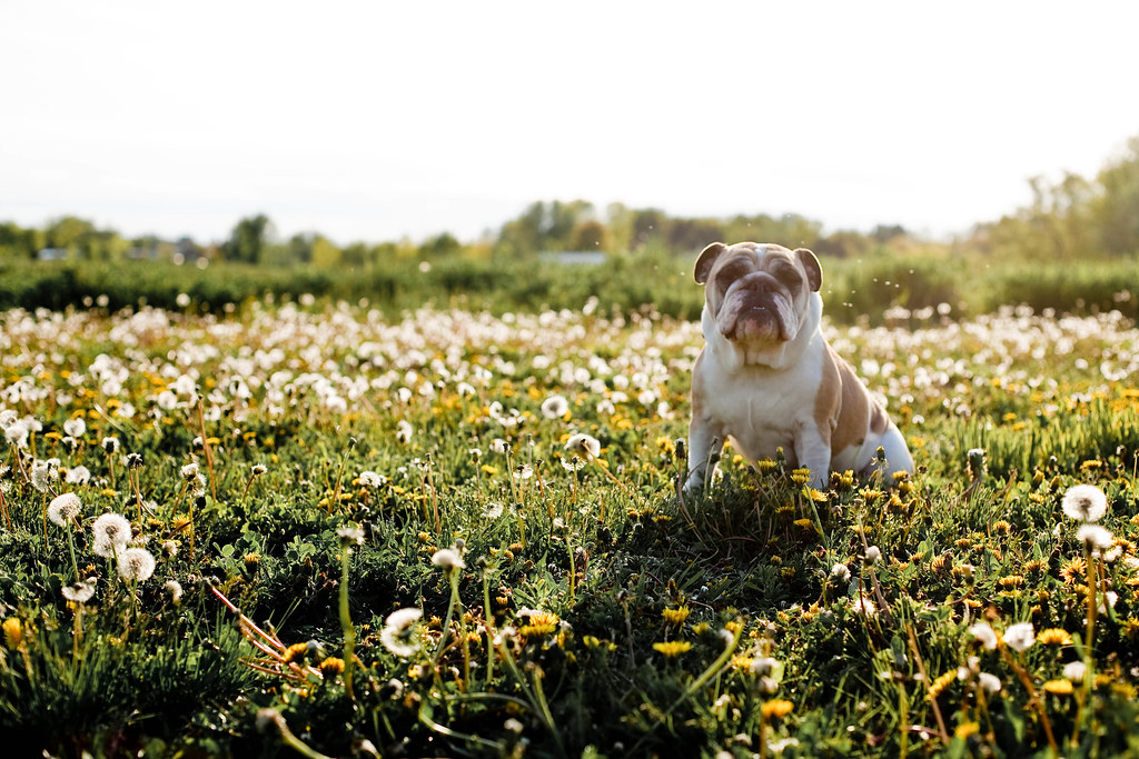 18/52: A Dog Among Weeds