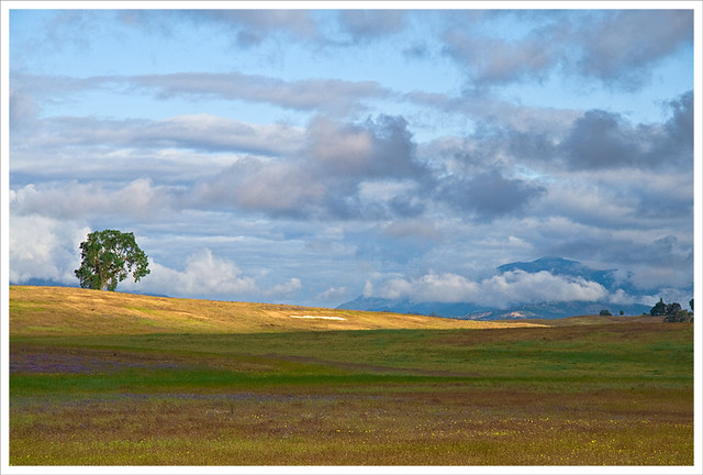 Field & Tree & Mountain & Clouds