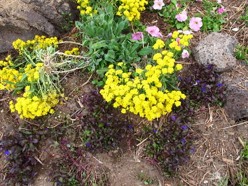 Garden Colors #1 5/16/10