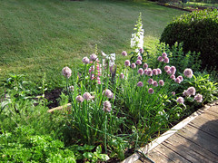 herbs and perennials
