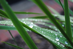 Detail (jrse) Tags: plant green water grass environmental environment molecules