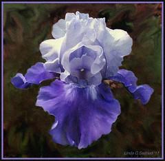 First iris of 2011