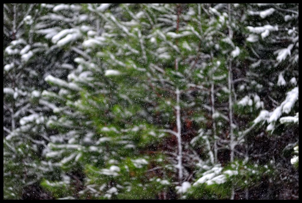 Day 715 - Winter Wonderland