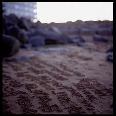 Fleeting Poetry (phy5ics) Tags: nyc newyork 120 6x6 film beach brooklyn dumbo daily 120film eastriver 365 hasselblad500cm project365 fujiprovia400x zeissplanartf2880mm