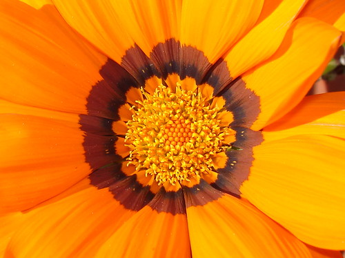 Inside the orange flower