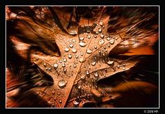 hope (Mariusz Petelicki) Tags: autumn hope leaf jesień liść nadzieja canon400d mariuszpetelicki vosplusbellesphotos