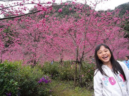 你拍攝的 3娃娃與櫻花。