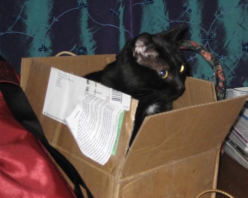 Raven inna Box