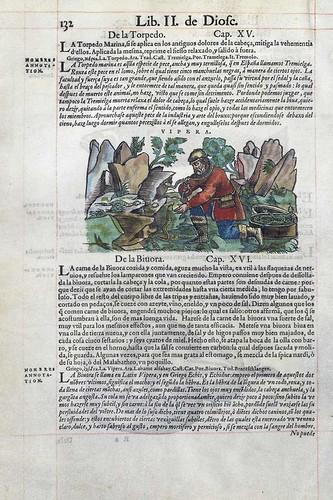 008-La vibora- Pedacio Dioscorides Anazarbeo 1555