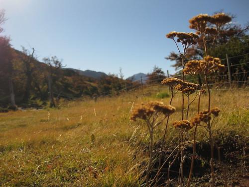 flowers, El Chalten