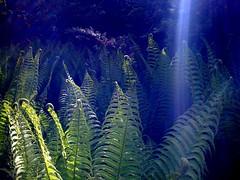 BoGa_01_0409 (dether moordenwood) Tags: farn neuss botanischergarten