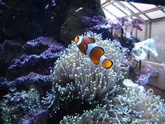 Nemo et son anémonemenome