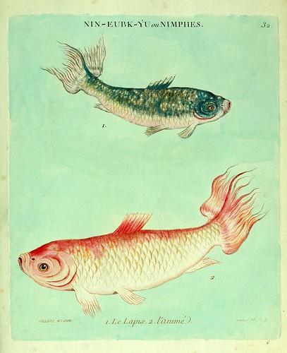 016- El lapislázuli y el Animado-Histoire naturelle des dorades de la Chine-Martinet 1780