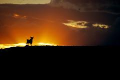 El Toro Sunset