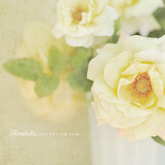 Friendship... (Shana Rae {Florabella Collection}) Tags: life flowers light roses texture glass yellow milk still thankyou natural textures vase testimonial florabella shanarae kuangwoo